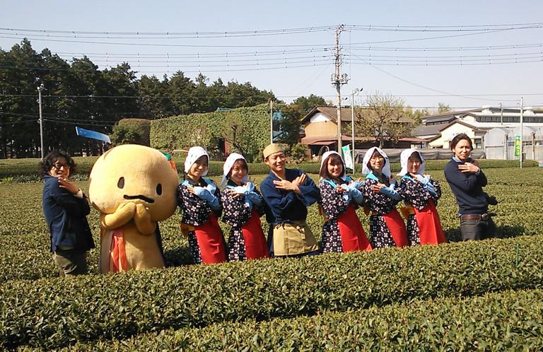 【動画】茶畑で舞う茶娘のそうだ埼玉ダンス!【横田園 狭山茶 / そうだ埼玉撮影】