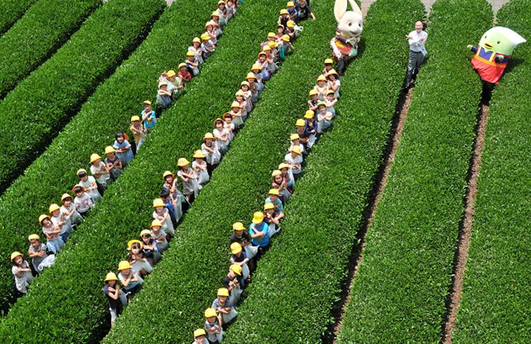 【入間市】茶園で小学生たちと一緒に!田中龍夫市長の埼玉ポーズ!