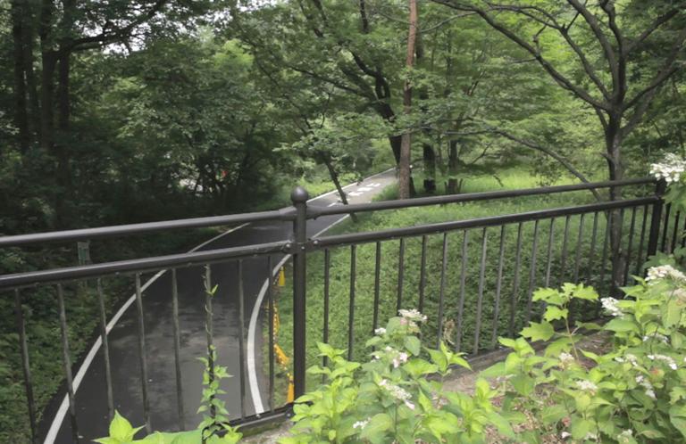 埼玉県民の原風景!森林公園!