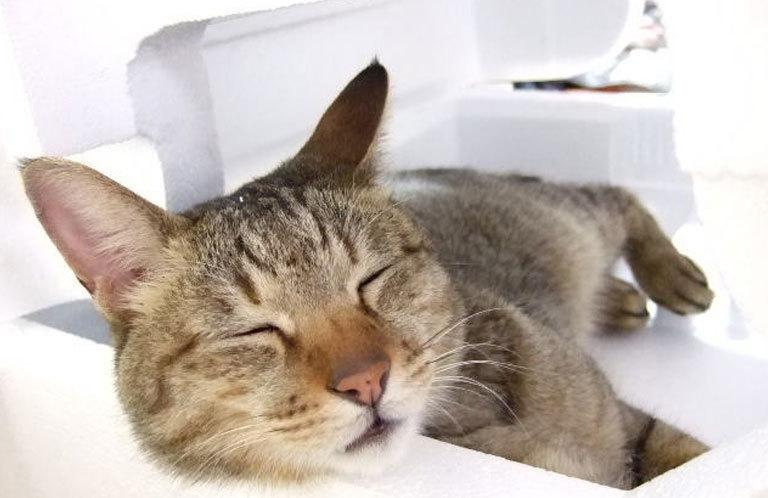 【宇都宮線 高崎線】3月からは寝過ごすと大変なことに