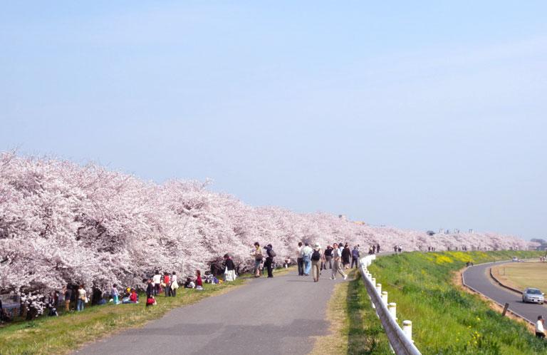 kumagaya_hanami_02