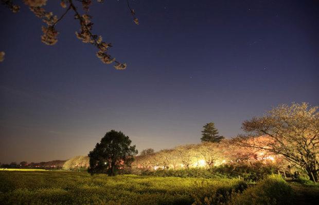 「埼玉 お花見スポット」で検索すると最もよく出てくるお花見スポット10選