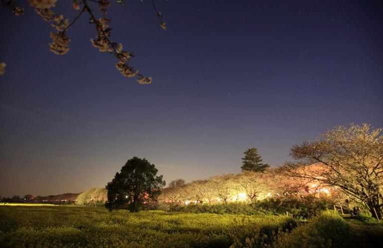 「埼玉 お花見スポット」で検索するとよく出てくる埼玉 桜の名所10選