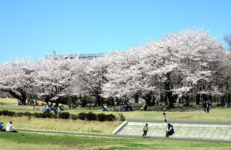 tokorozawa_hanami_03