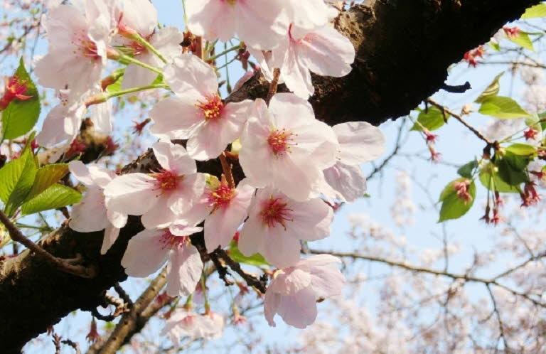 포맷변환_桜