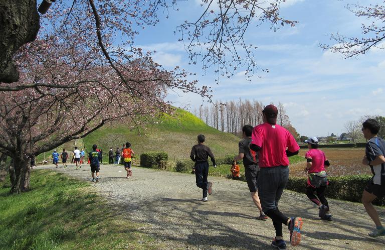 春だ!桜だ!第33回行田市鉄剣マラソン大会