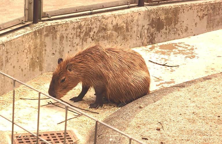 動物と自然に癒される!狭山市 智光山公園の魅力を全力レビュー!