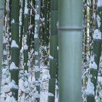 大雪っていうか竹の伐採で運転見合わせになる八高線