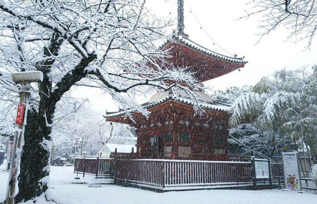 みんなが投稿した美しき埼玉の雪景色まとめ10選 2018