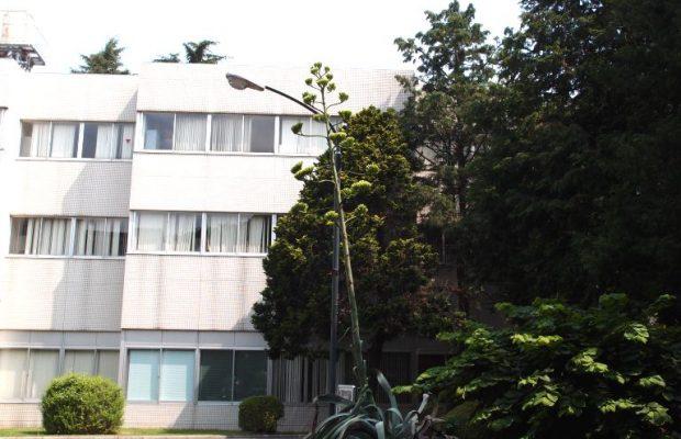 50年に1度だけ咲く花がもうすぐ開花!東洋大学川越キャンパス