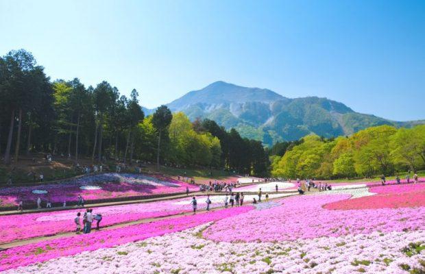 2019年GWは10連休!絶対行きたい埼玉県内の注目イベントまとめ