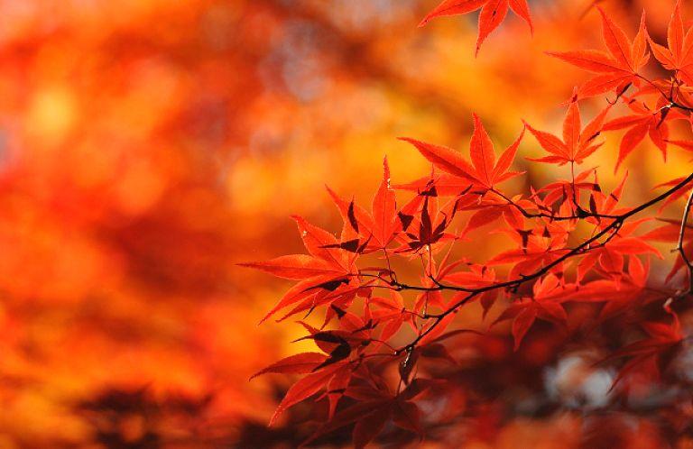 秋限定の自然の芸術!埼玉県内の紅葉スポット8選